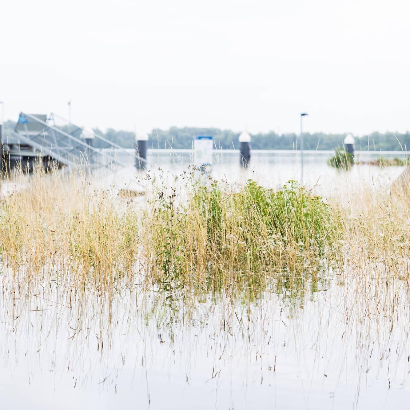 Uitkijkpunt over de Maasplassen